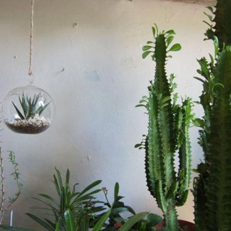 palmroom2